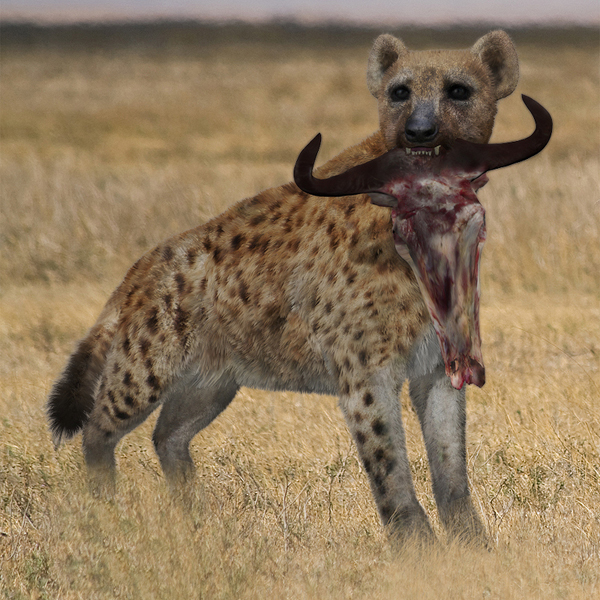 Spotted Hyena by AM